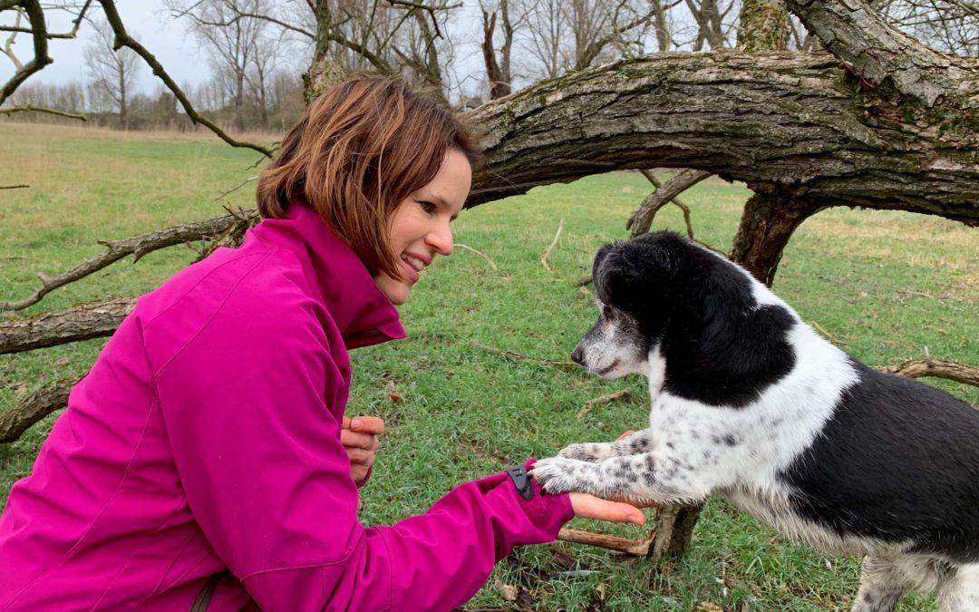 Wie bekomme ich meinen Hund bei Ablenkung besser fokussiert – insbesondere beim Spaziergang?